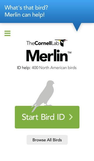 bird watchers rejoice cornells new merlin tool can identify species in your photos id