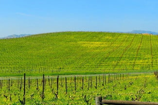 """Bliss,"" as seen today in California's Sonoma Valley."