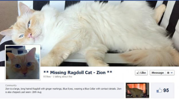 Missing Cat Facebook Page