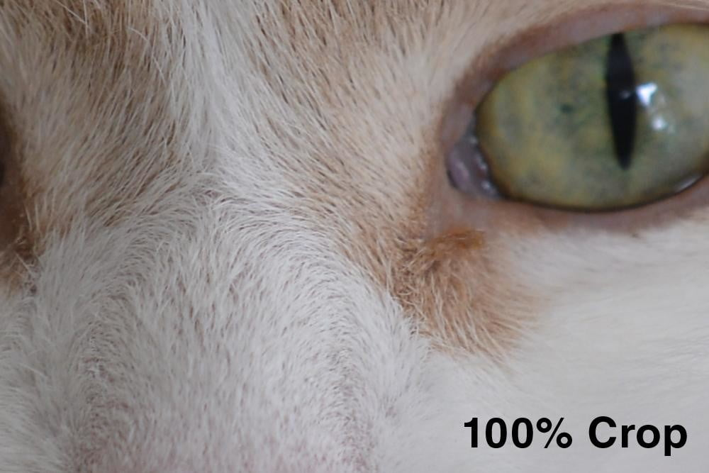 nikon d800 review cat eye 100% crop