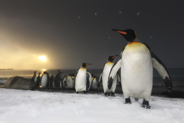 netflix our planet  k nature documentary penguins