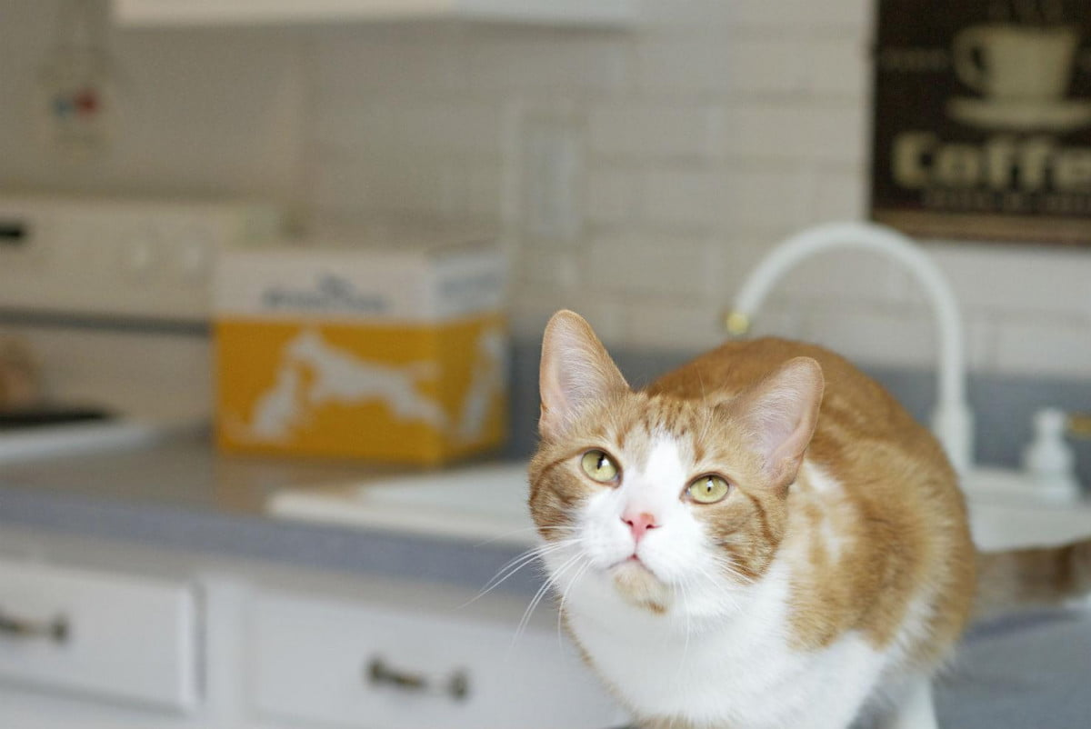 petbrosia makes customized pet food delivers it to your door cat