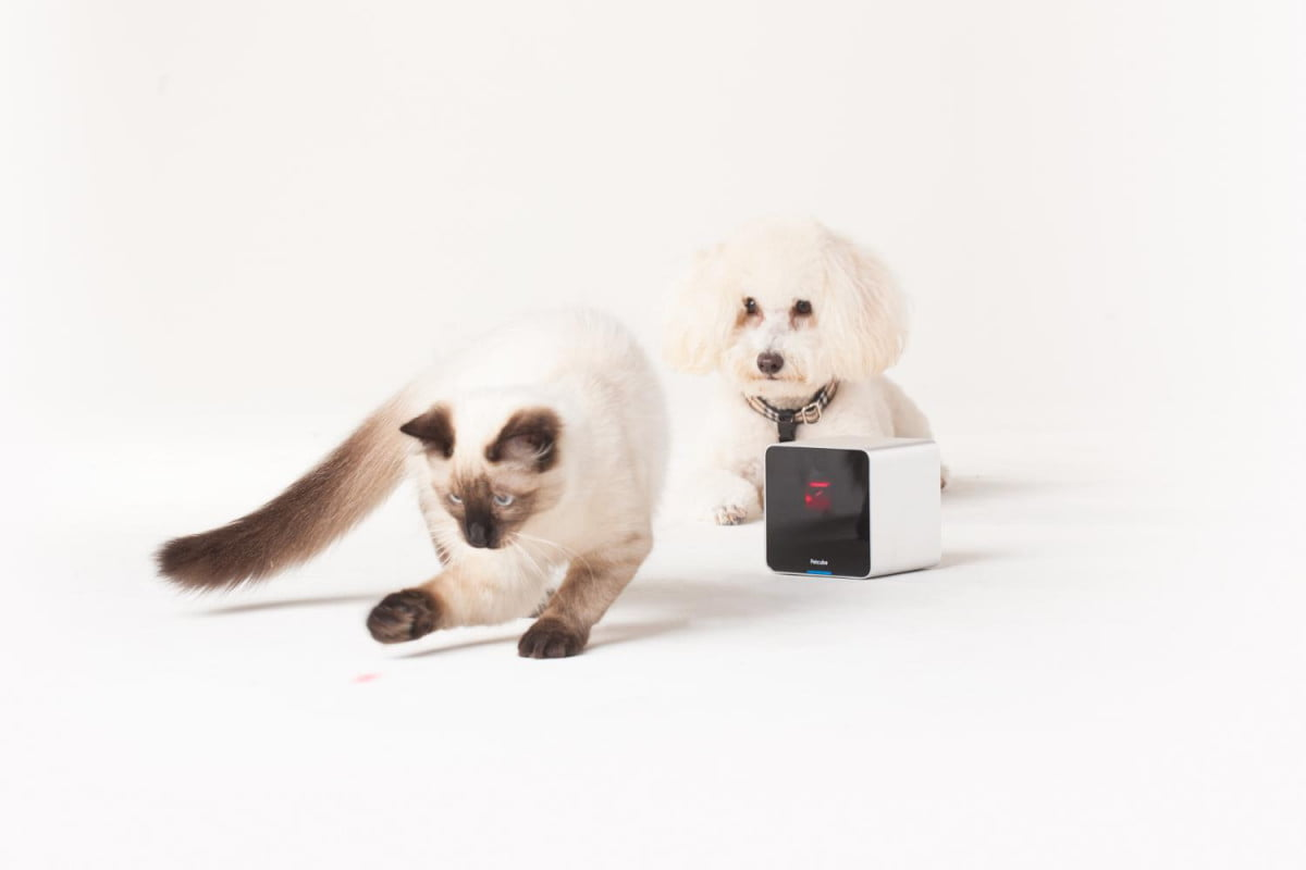 crazy or genius gadgets petcube camera dog cat