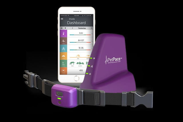 petpace health monitor is medic alert and fitbit for pets tracker product