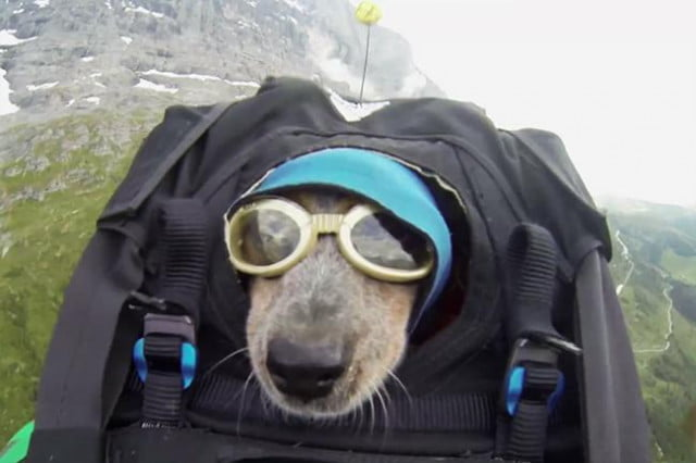 extreme adventurer dean potter base jumps off swiss mountain takes dog for the ride and whisper jump