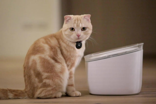 pura smart water feeder tracks your cats drinking habits