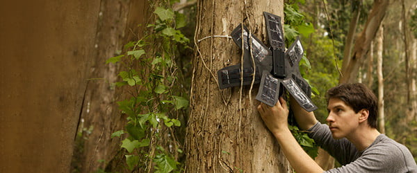 Cell phones in Amazon trees alert rangers to illegal logging and record wildlife
