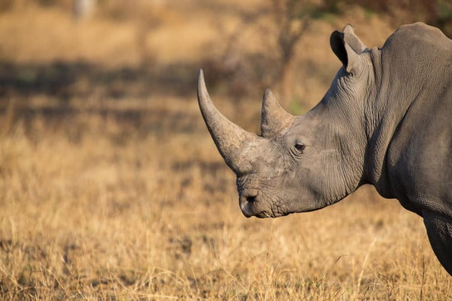south africa protect rapid anti poaching system rhino