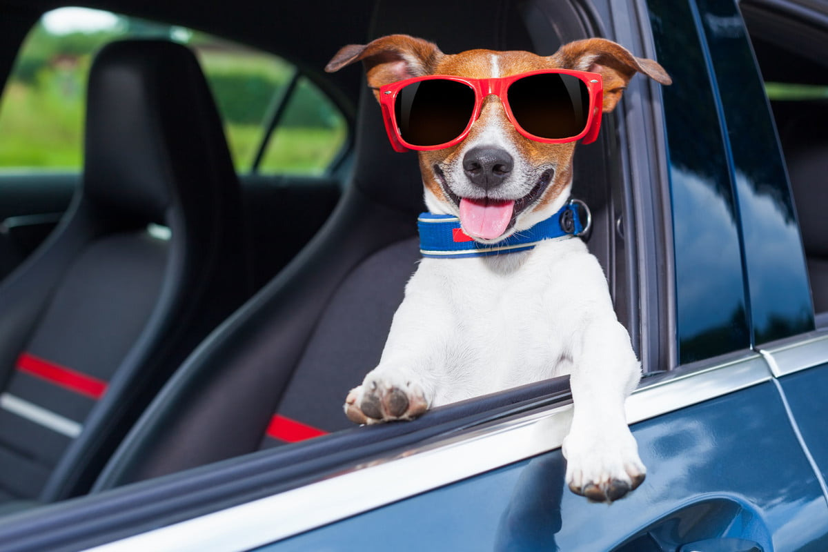 thermaltag monitors car temperatures for pets dog