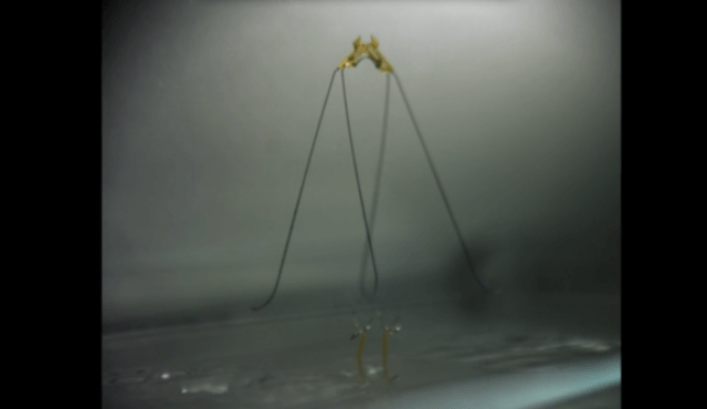 harvard insect robot that can jump on water screen shot  at pm