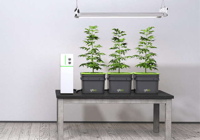 gro io hydroponic screen shot  at pm