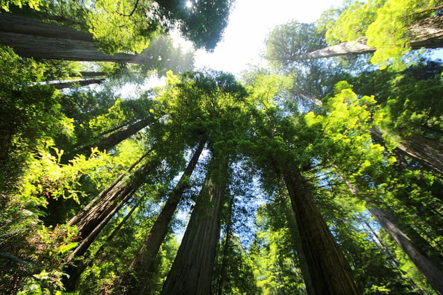 earth greening study shows sequoia