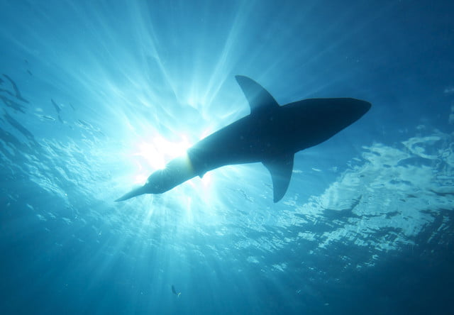 aussie beaches spend big on tech to stop shark attacks bathers