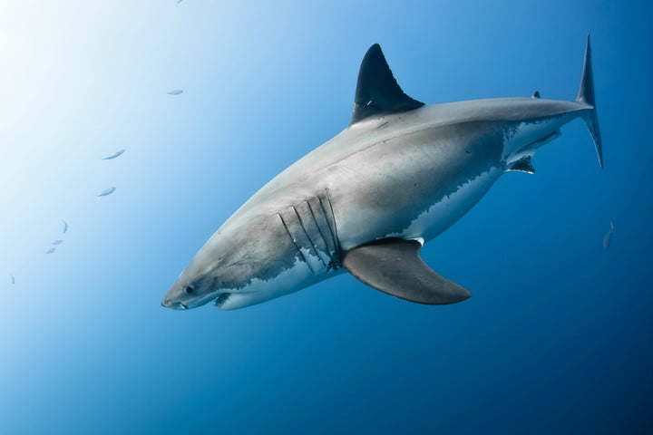 biomimicry examples shark