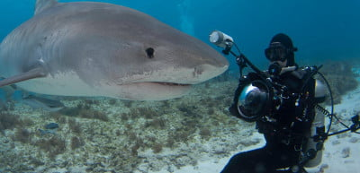 Shark photographer David Fleetham