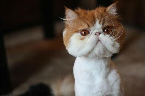grumpy cat may be the best on internet today but these kitties are close contenders shave