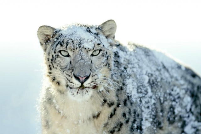 apple just signaled support os x snow leopard ending safari update