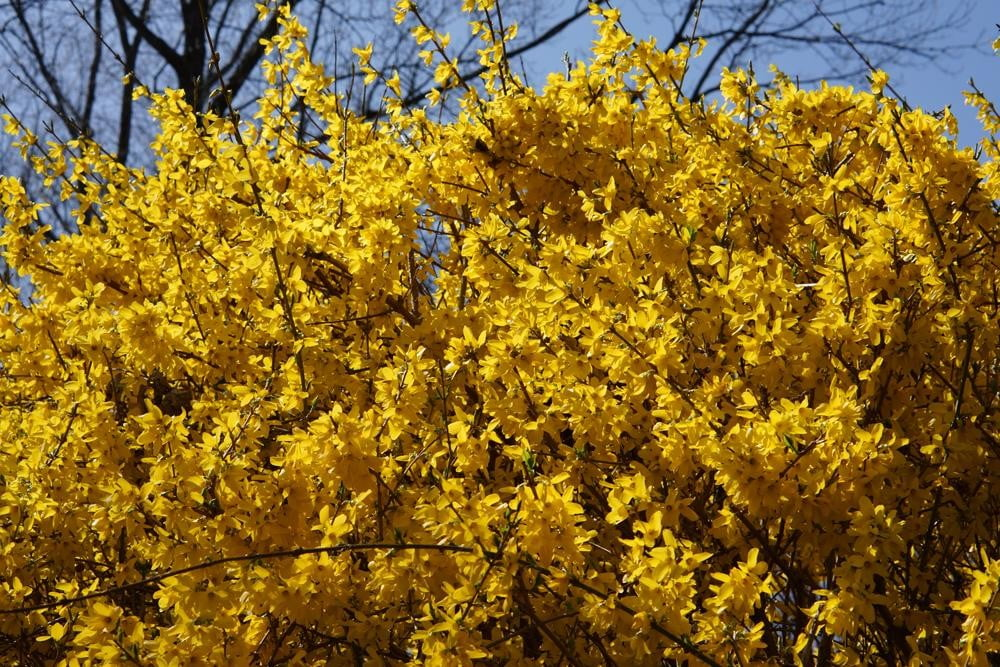 sony-alpha-nex-7-review-sample-photo-tree-yellow