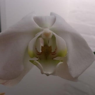 Sony-Xperia-zL-review-sample-flower