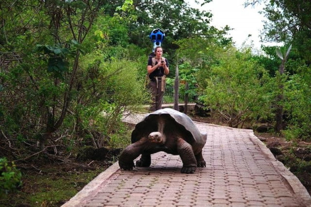 galapagos islands comes to street view galapago