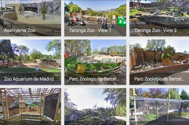 pandas come to street view with more zoos added service