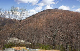 14_dogwood-and-bald-mt-web