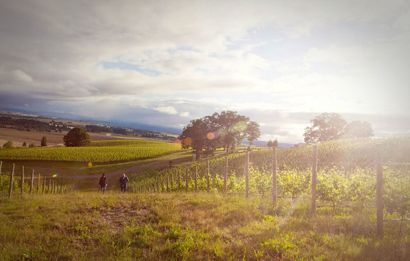 Antica Terra is a cult favorite in the Willamette thanks to its highly rated pinot noir.