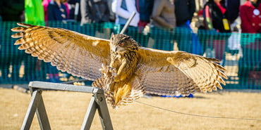 SEWE birds of prey, Southeastern Wildlife Exposition