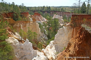 "Photo courtesy of <a href=""http://www.soils.usda.gov"">USDA Natural Resources Conservation Service</a>"