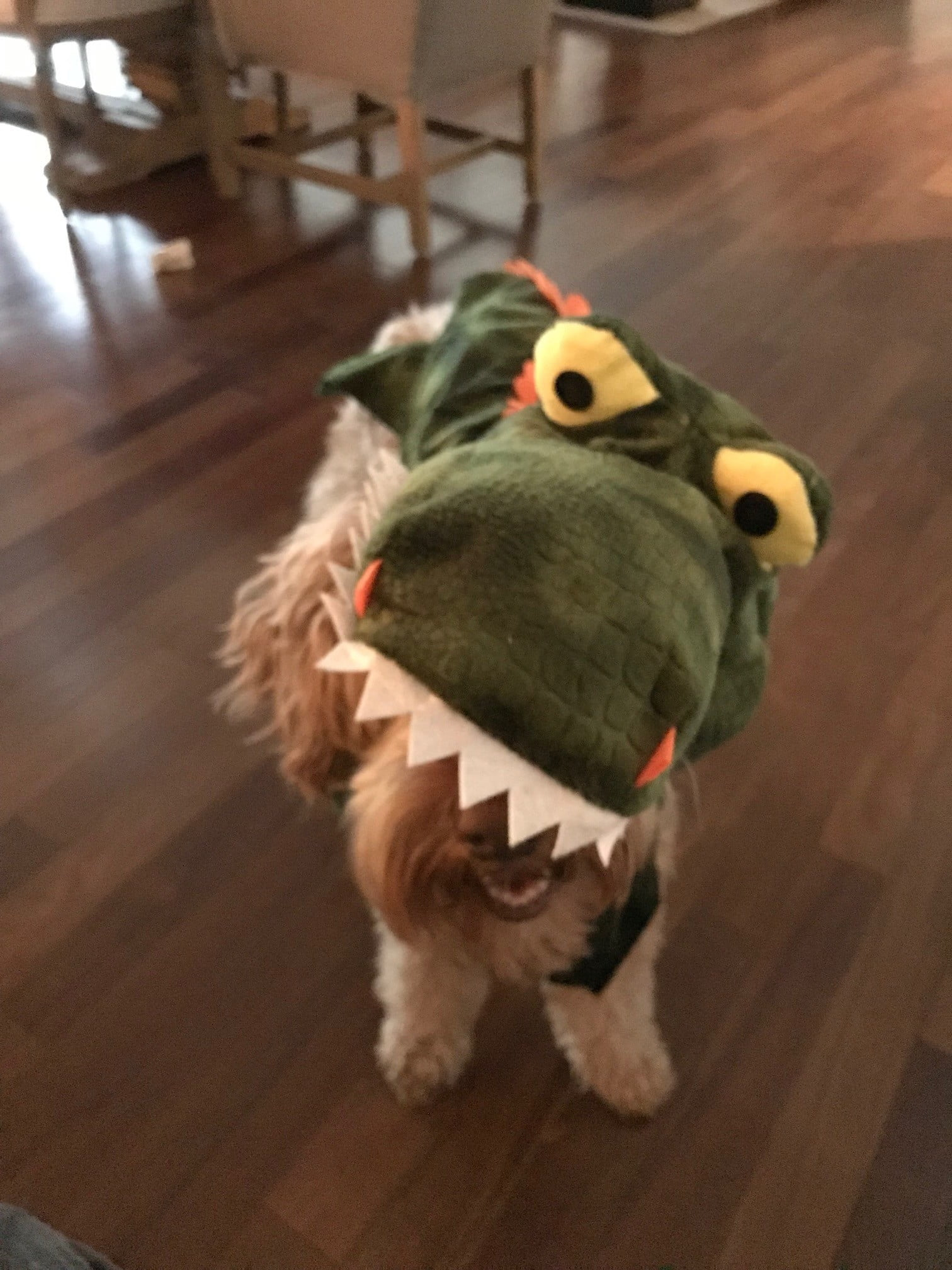 a brown australian labradoodle in a green dragon costume stands on hardwood floor
