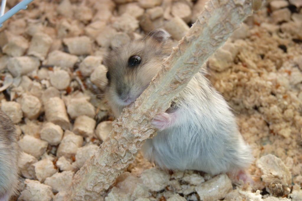 Which types of bedding are safe for your hamster?