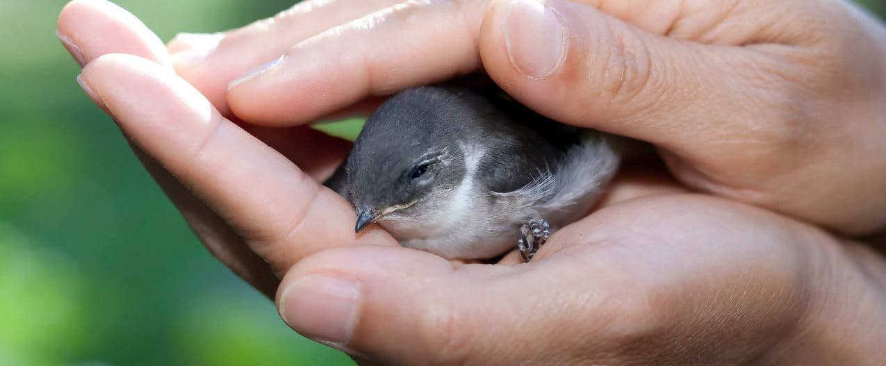 Person holding wounded bird in hands