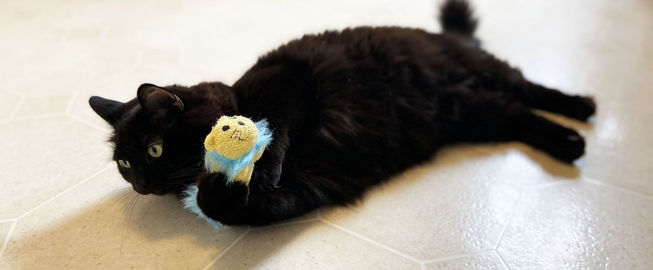 cat toy petmate review black spooky playing with lion