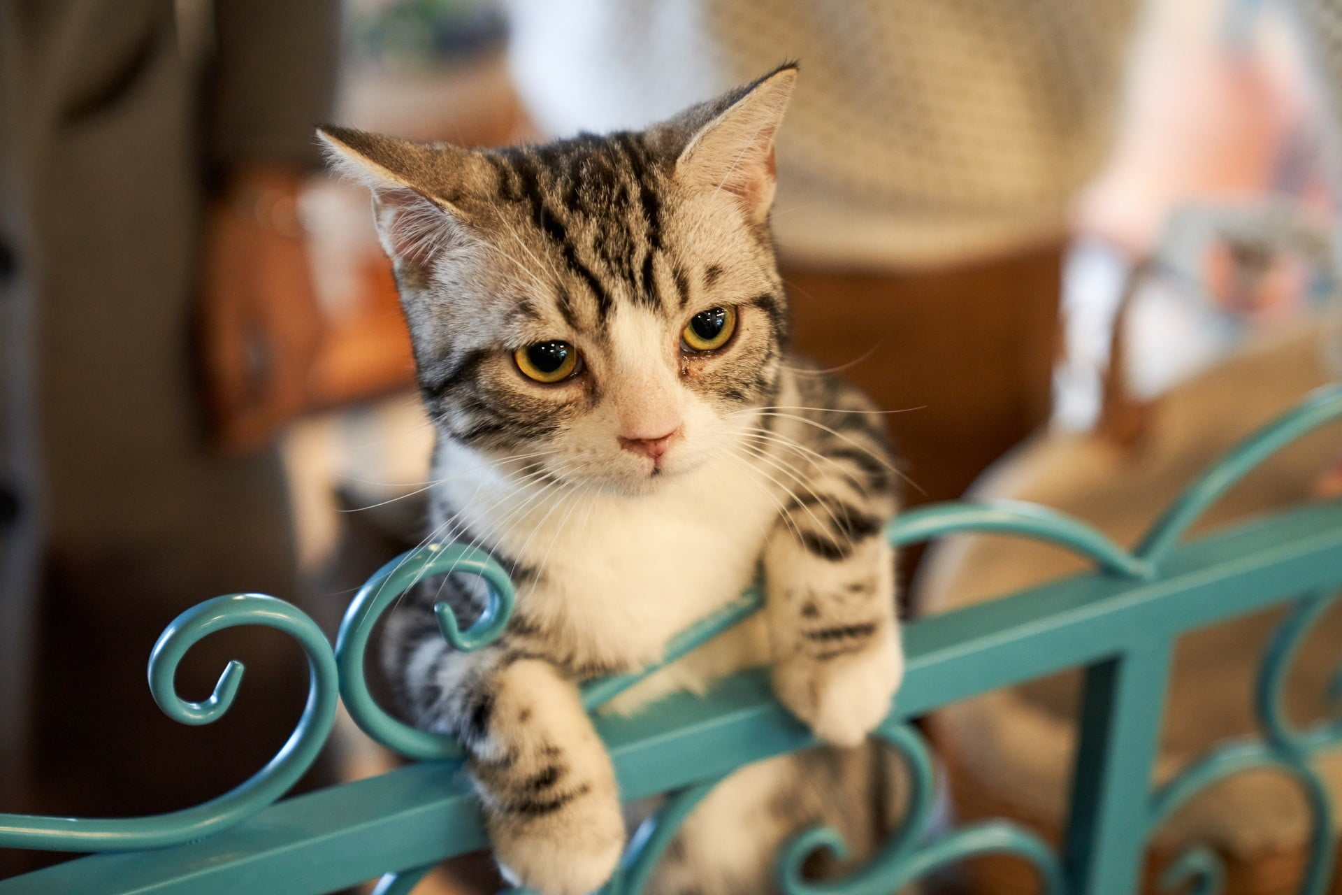Cat leaning against a metal gate