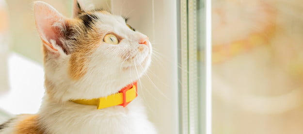 Cat sitting and looking out of a window