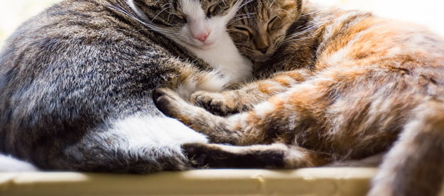 Two cats curled up together for a nap