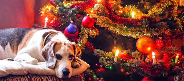 dog in front of a Christmas tree