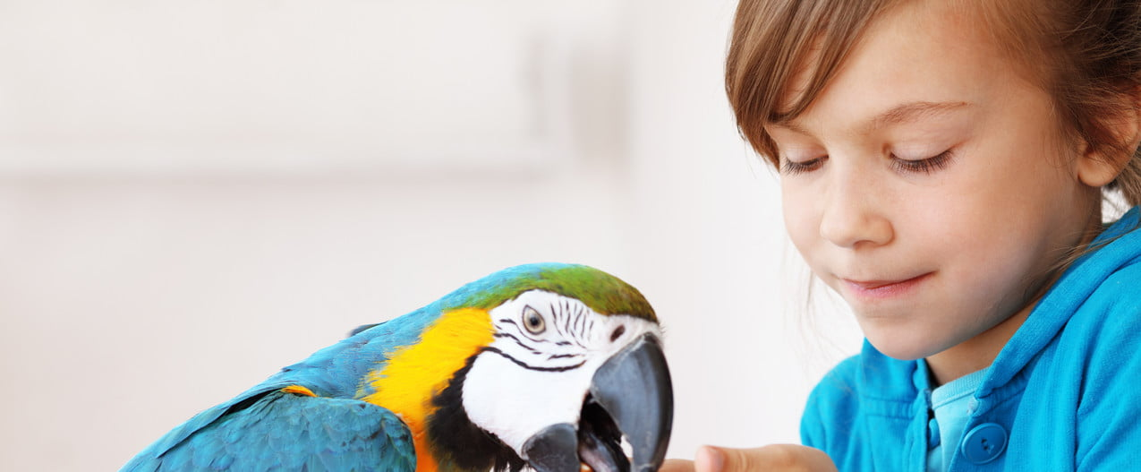 Girl feeds seed to her pet parrot