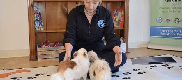 meditative woman with two small dogs