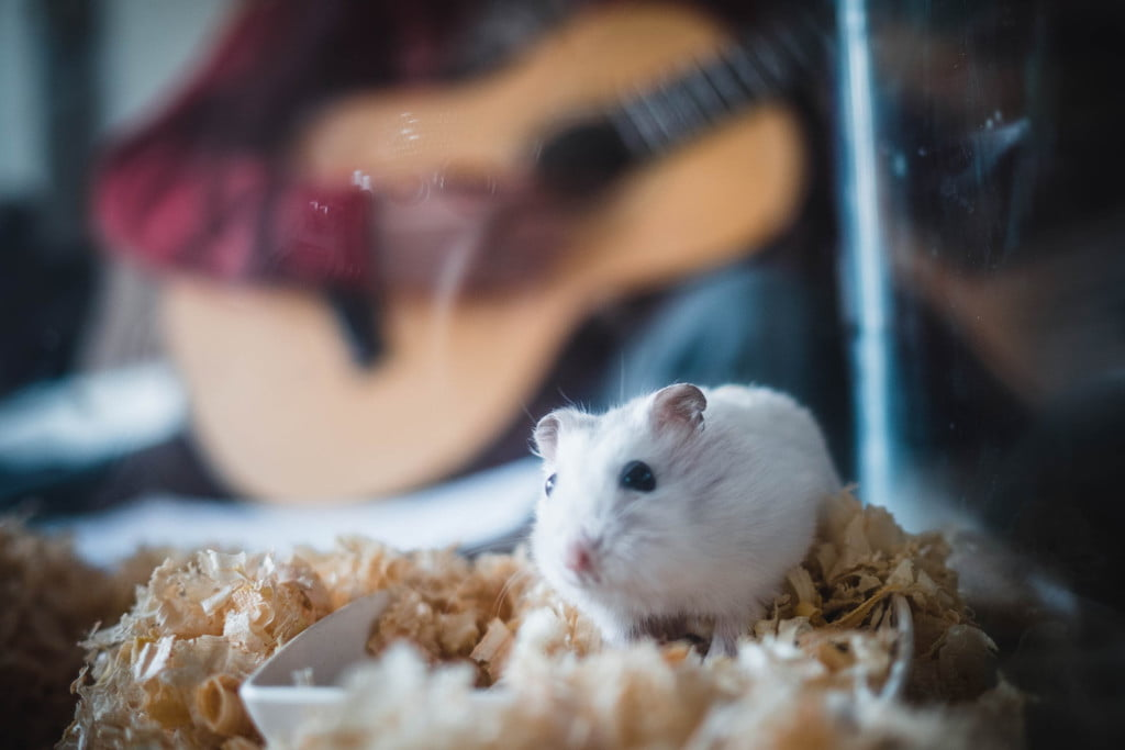 Hamster in a glass box