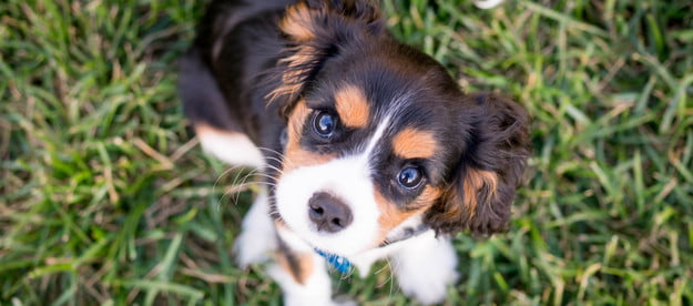 puppy in grass looking up