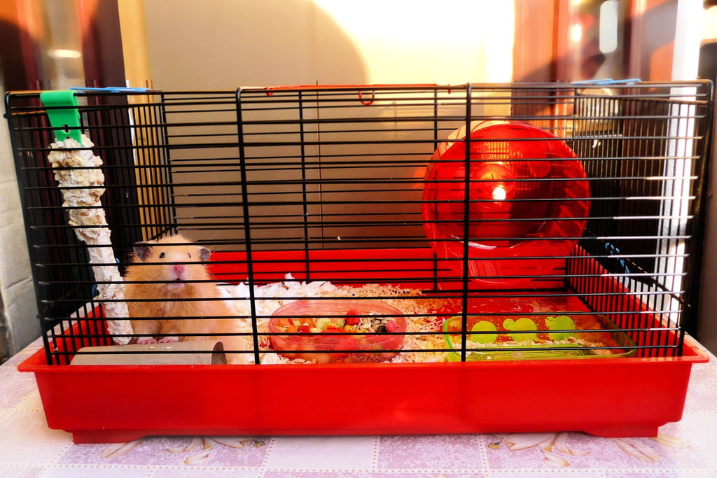 Hamster in a red cage