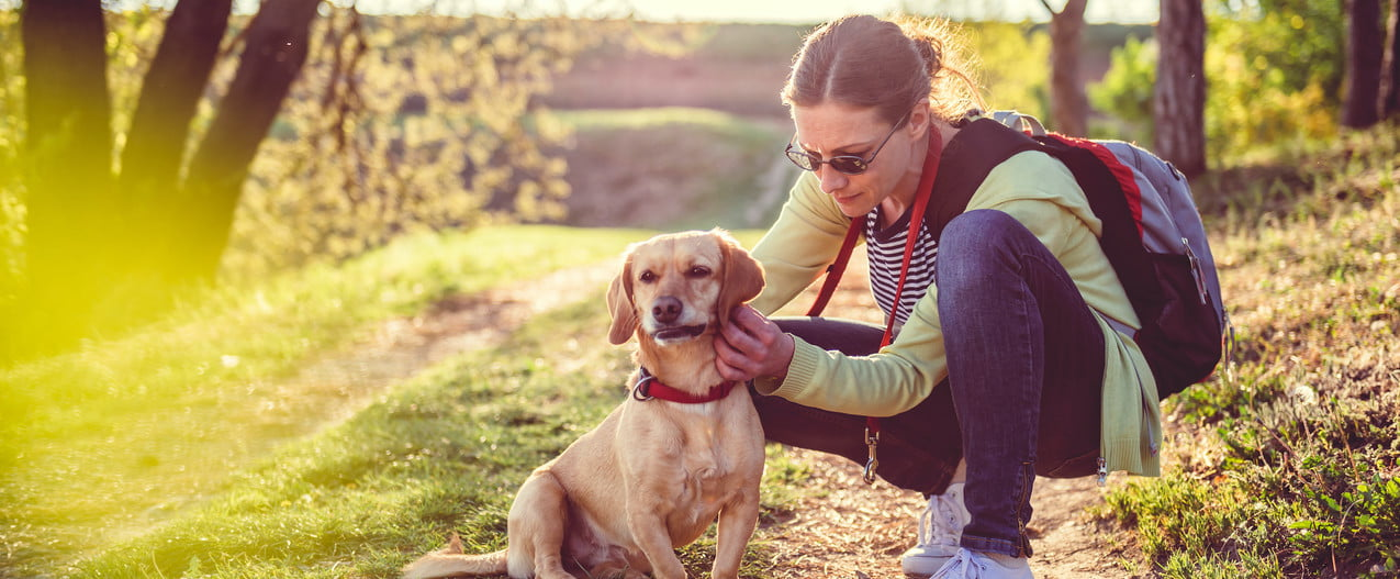 a woman stops on a sunny walk to check her blonde dog for ticks