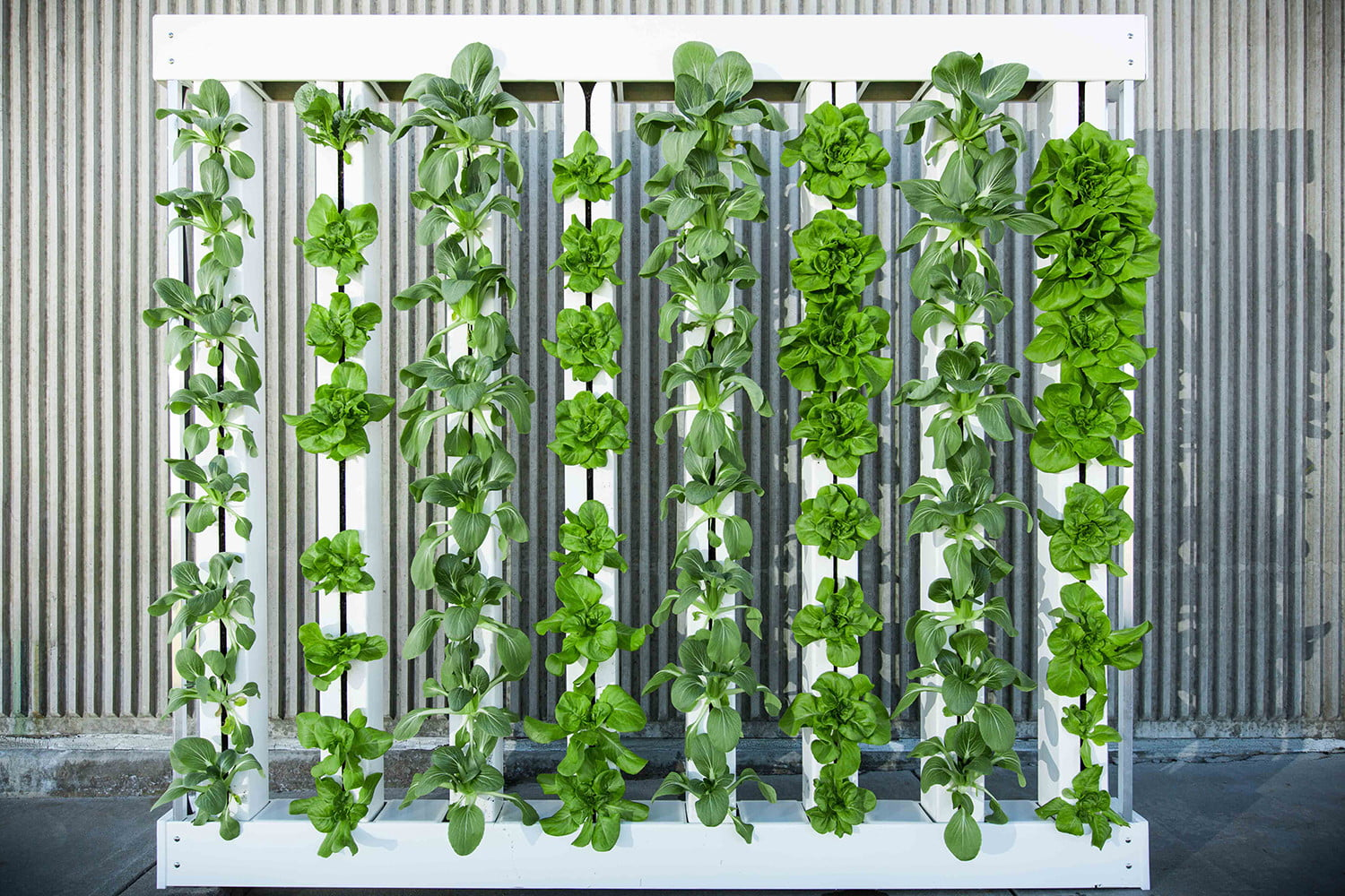 Will Vertical Farming Continue To Grow Or Has It Hit The