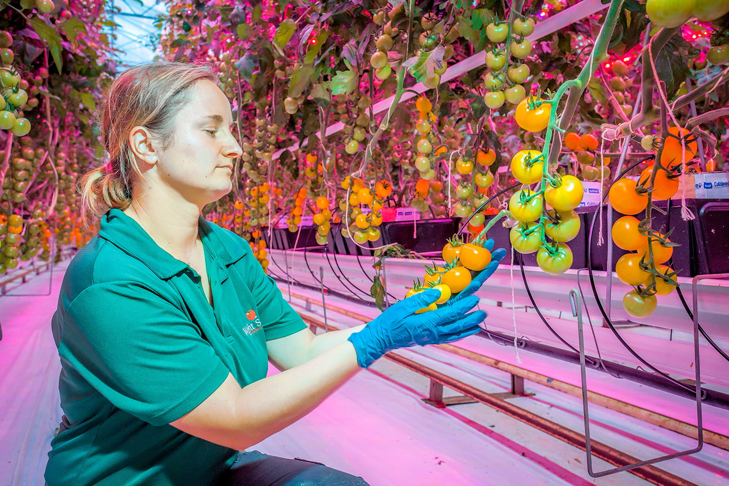 oneplus  news vertical farming future of food