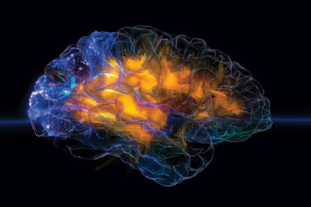 its finally happened scientists construct part of a rat brain in computer vizzies glass