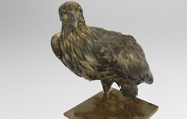 white-tailed-eagle-3d
