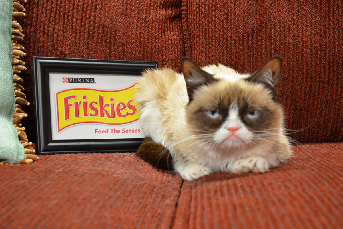 wtf internet grumpy cats achievement award proves we dont know when to stop