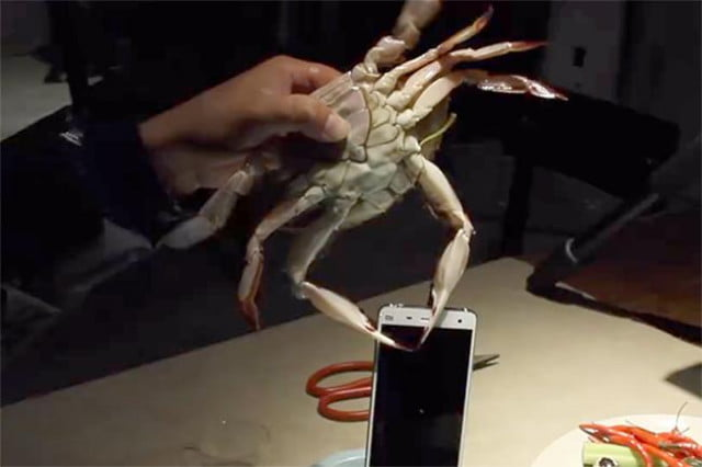 xiaomi tests mi  with crabs and lobsters crab test v